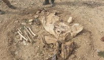 Remains of two IS victims found in February in the north of Shingal (EP)